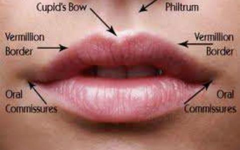Anatomia Buzelor